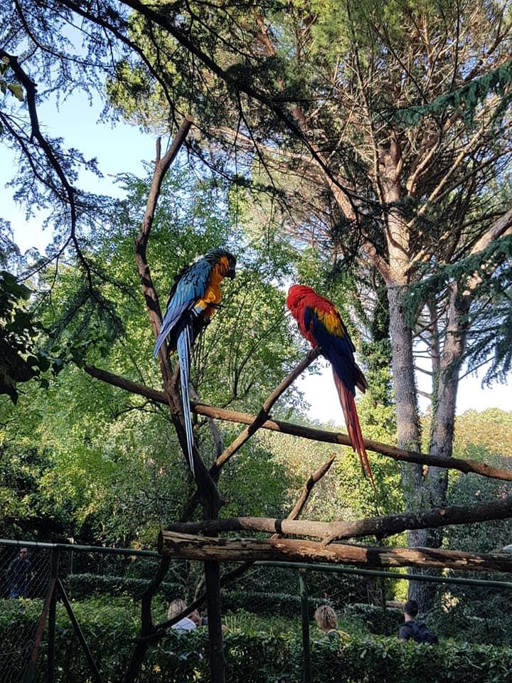 pappagalli-allo-zoo-di-pistoia